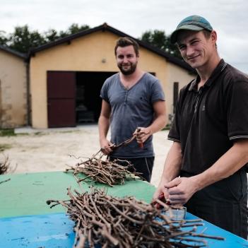 Préparation des vignes utilisées pour le filtration du vin